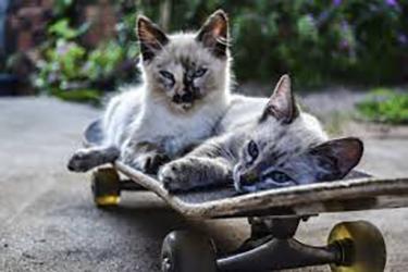 atraer tráfico: Gatos en patinete
